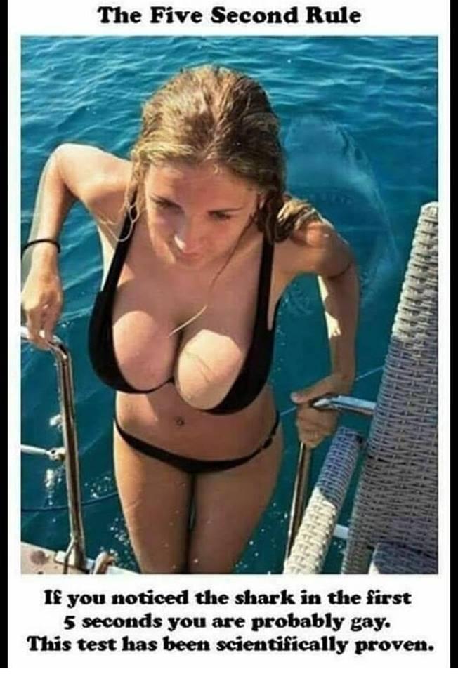 bloody shark.jpg