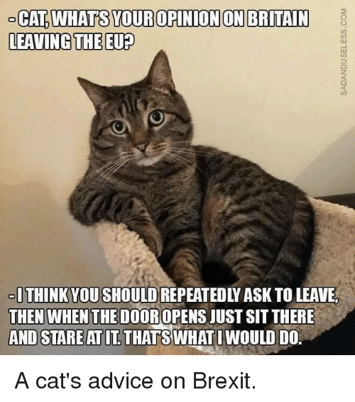cat-whats-your-opinion-on-britain-leaving-the-eu-think-6163160.png