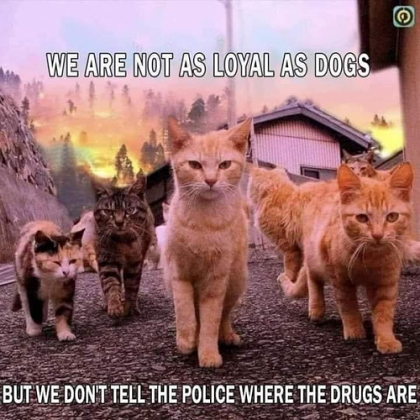 cats dont snitch .png