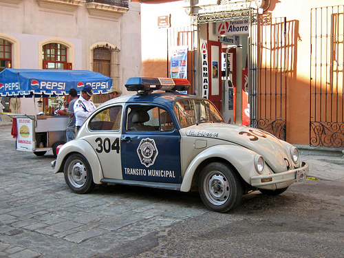 mexican-police-beetle-olivier.brisson421-l.jpg