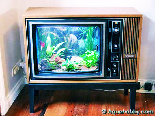 tv-fish-tank.jpg